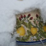 tavolo limoni innevato 150x150 - Galleria
