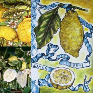 Limoni dipinti e modellati da Laura Talio