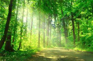 foresta 2 300x198 - chi siamo rispetta l'ambiente